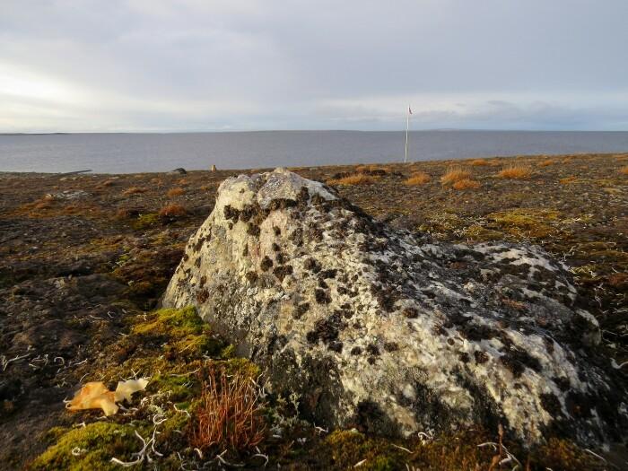 Условия жизни на острове более чем жесткие / Фото: plantarium.ru