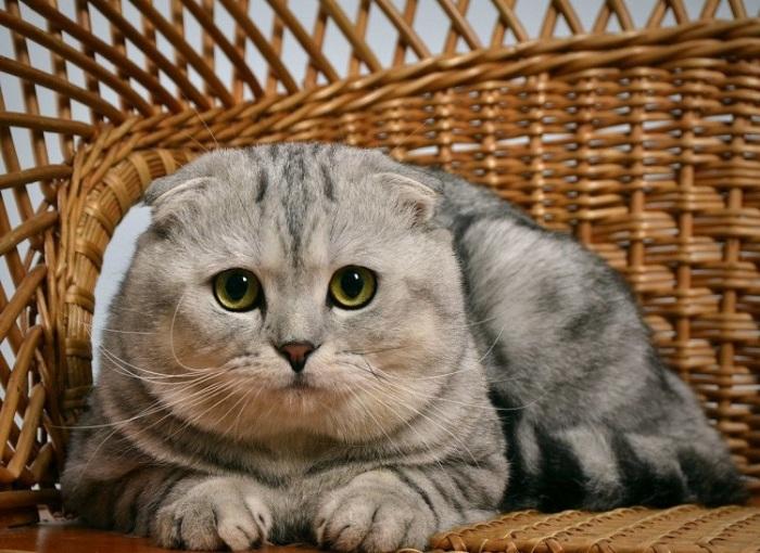Заставить котика слушаться силой еще не удалось никому / Фото: smallivingworld.ru