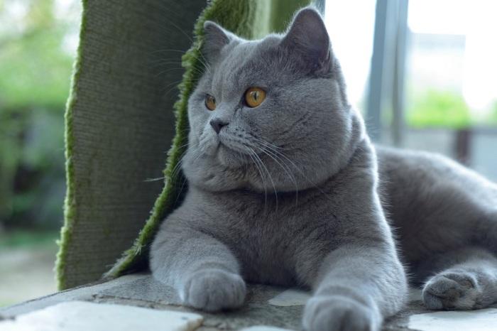 Хотите воспитать котика, добейтесь того, чтобы он вас понимал / Фото: ua-vk.ru