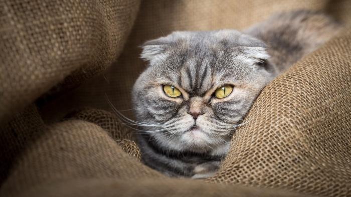 Если королевская особа не в настроении, то осуждающего взгляда в некоторых ситуациях вообще не избежать / Фото: wallbox.ru