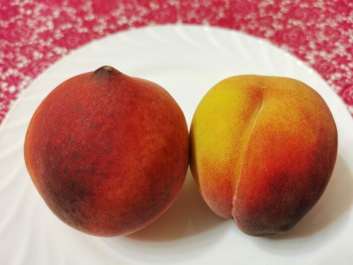 При наличии сверху плода небольшого углубления его относят к «девочкам», если же вместо ямки идет небольшой бугорок – «мальчик» / Фото: topfakty.com