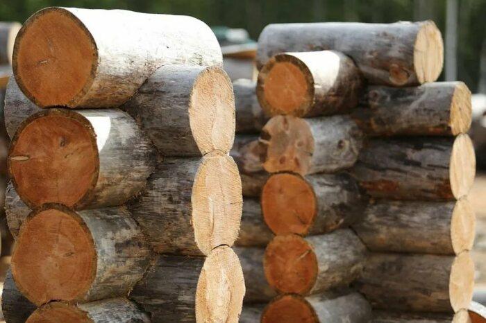 Деревянные срубы могут простоять более 300 лет, главное - правильно выбрать древесину / Фото: instagram.com