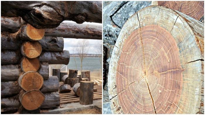 Правильной древесиной специалисты называют сосновый сухостой кело / Фото: ecokelo.ru