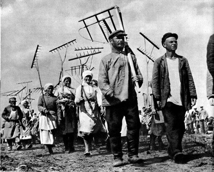 Трудодни начали начислять колхозникам после проведения коллективизации / Фото: vtambove.ru