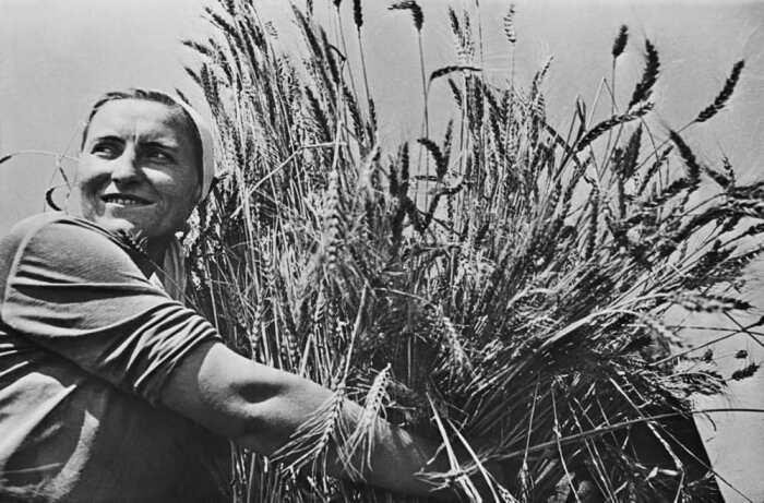 Основной единицей расчета с крестьянами было зерно, которого в военные годы категорически не хватало / Фото: zeir.ru