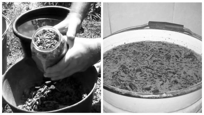 Щелок, приготовленный холодным способом / Фото: mir-zdravia.com.ua