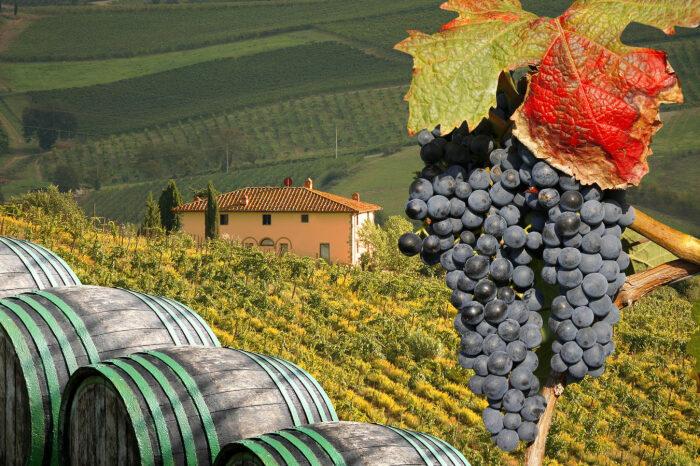 В Тоскане в семидесятые годы прошлого столетия стали появляться виноделы, которые решили изготавливать напиток из винограда бордоских сортов / Фото: wineaxe.ru
