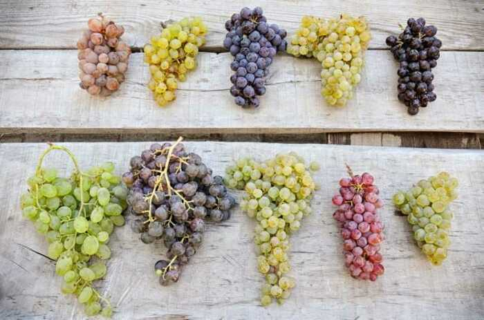 Столовое вино может представлять собой ассамбляж из нескольких виноградных сортов, годов урожая, регионов / Фото: tarkhagro.ru