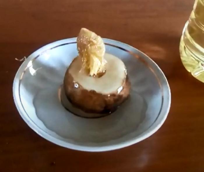 Свеча из картофеля будет гореть долго / Фото: YouTube