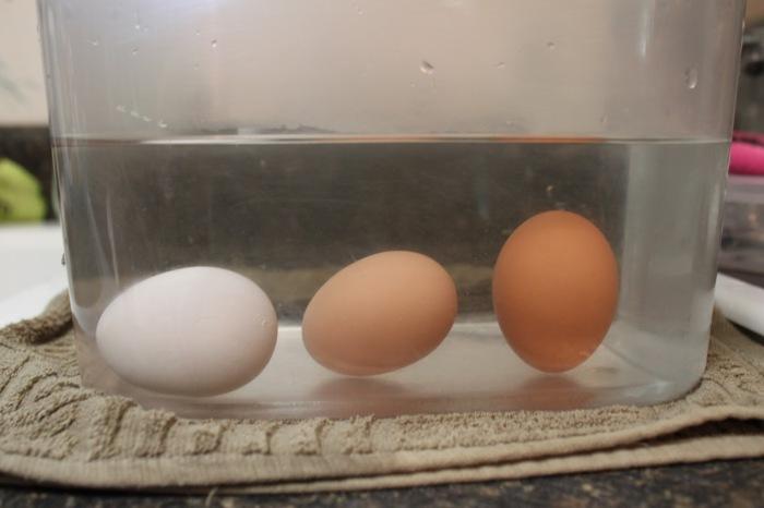 Чтобы проверить свежесть продукта, нужно яйцо поместить в воду / Фото:  keywordbasket.com