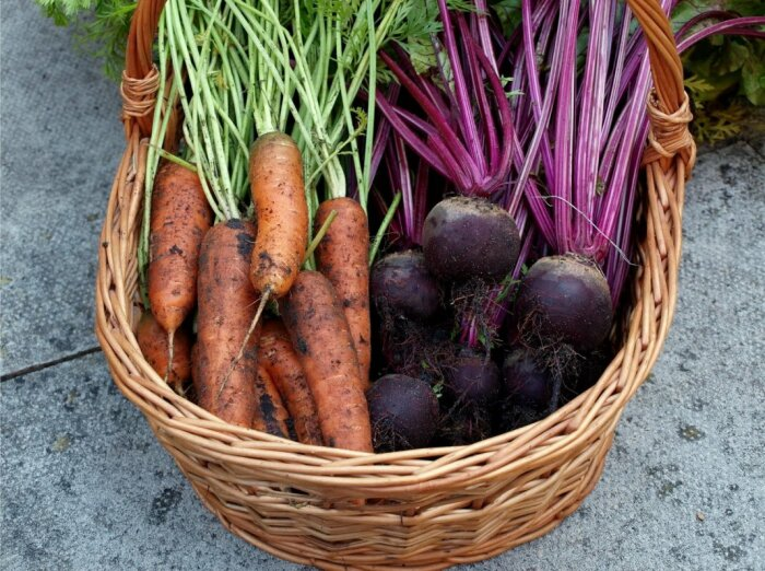 В очень кислой почве плохо растет не только секла и помидоры, но и морковь, бобовые, огурцы / Фото: domicad.com.ua