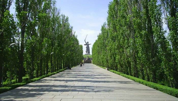 Благодаря форме тополя можно высаживать близко друг к другу / Фото: волгоград-экскурсии.рф
