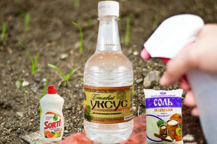 В состав средства входят: вода, соль, уксус и моющее средство для посуды / Фото: allremont59.ru