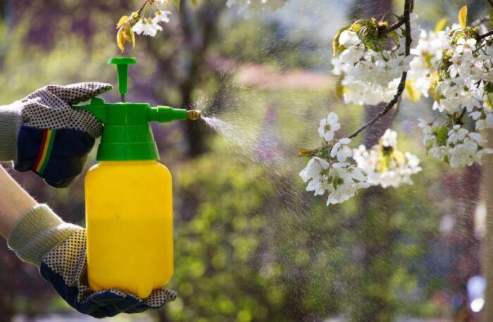 Полученным раствором следует обильно опрыскать дерево / Фото: superdom.ua