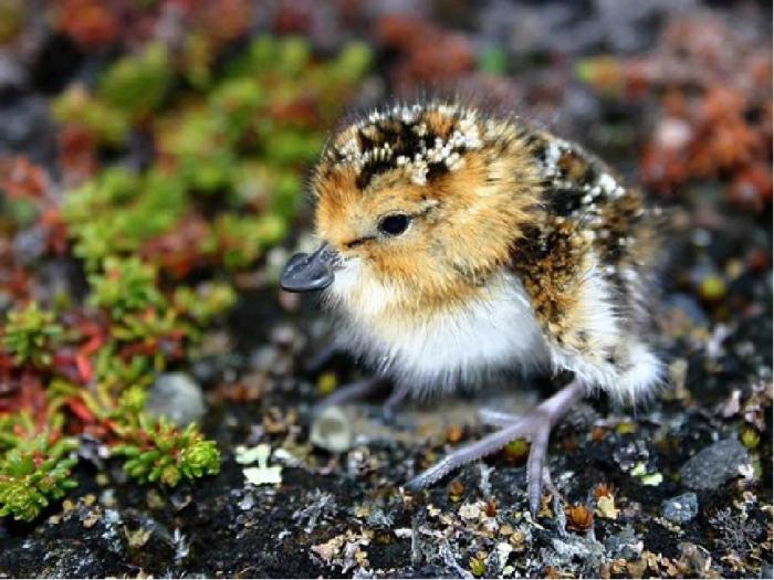 Юные птенцы сначала находятся  в боксе, а потом их переводят в авиарий / Фото: rbcu.ru