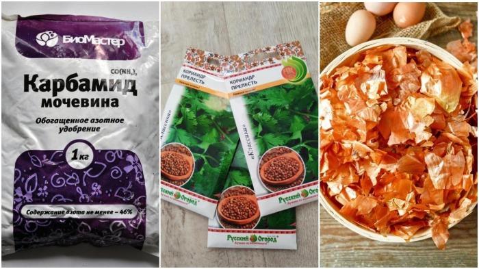 Основные компоненты для питания картофеля в процессе роста: мочевина, семена кориандра и шелуха лука / Фото: krsk.au.ru