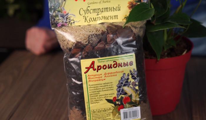 Спатифиллум следует высаживать в специальный грунт для ароидных / Фото: domashniecvety.ru