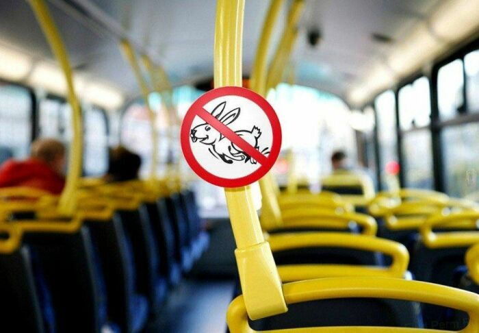 Пассажиры, не желающие оплачивать проезд, похожи на зайцев своим умением прятаться и сбегать от контролеров / Фото: news-life.pro
