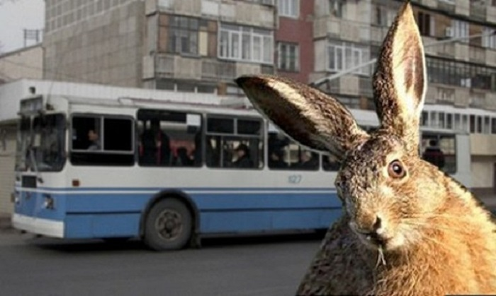 Кролик, как и заяц, считается трусливым животным / Фото: ВКонтакте