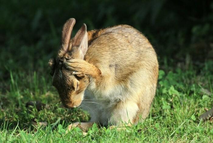 Существует предположение, что зайцами стали называть пассажиров из-за трусости и страха быть пойманными. / Фото: ok.ru