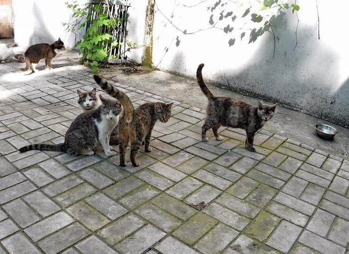 Две сотни лет назад первые поселенцы завезли в Австралию кошек, которые очень сильно размножились / Фото: stihi.ru