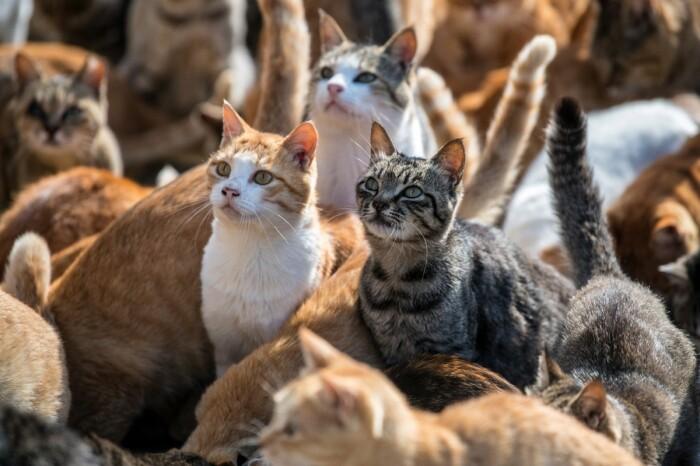 На сегодняшний день только домашних животных насчитывается до 5 - 6 миллионов особей и чуть меньше диких / Фото: zefirka.net