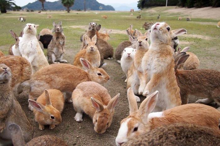 Мясо кролика считается диетическим продуктом / Фото: cattur.ru