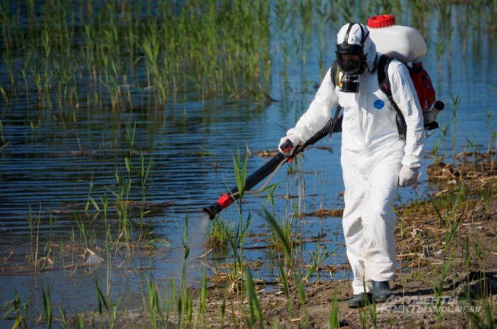 Обработка инсектицидами водоемов со стоячими водами в Китае неэффективна / Фото: dezlider.kz