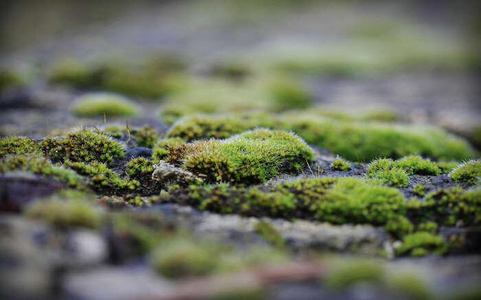 Мхи, лишайники и водоросли - стойкие организмы, способные выжить в любых условиях / Фото: homeli.ru