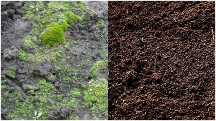 Придерживаясь рекомендаций, вы устраните положительные для роста организмов факторы и вернете почве ее нормальное состояние / Фото: stroy-podskazka.ru