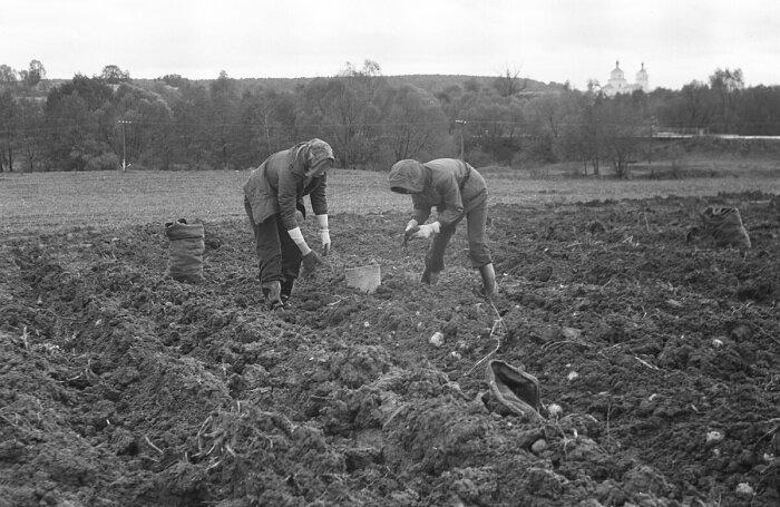 Чтобы прокормить своих граждан, советское правительство приняло решении о выделении земельных участков / Фото: rasfokus.ru