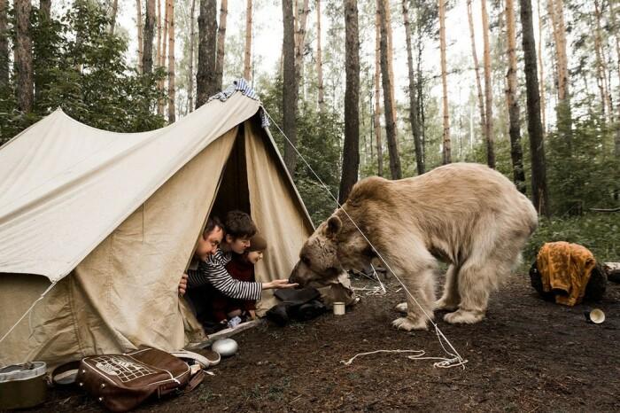 Медведям огонь вообще не страшен, они могут подойти к костру вплотную, если есть что-то вкусненькое / Фото: twitter.com