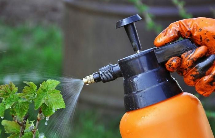 Разведите рассол с водой и сбрызните почву вокруг растений, чтобы уберечь их от сорняков / Фото: stopklopu.com