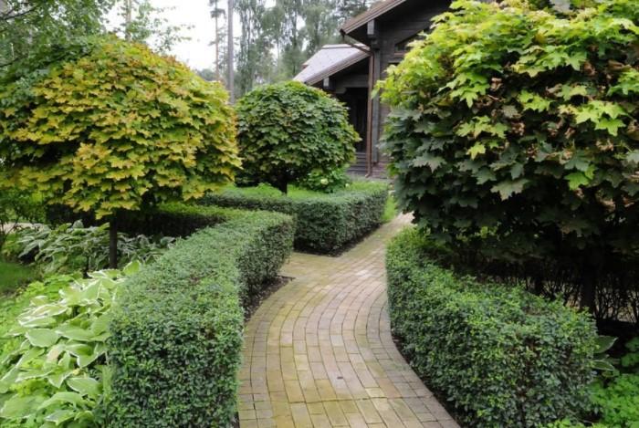 Декоративное растение станет украшением сада с ранней весны и до первых заморозков / Фото: design-homes.ru