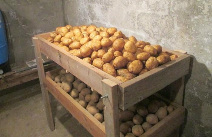 Оставлять для хранения нужно только хорошую картошку
