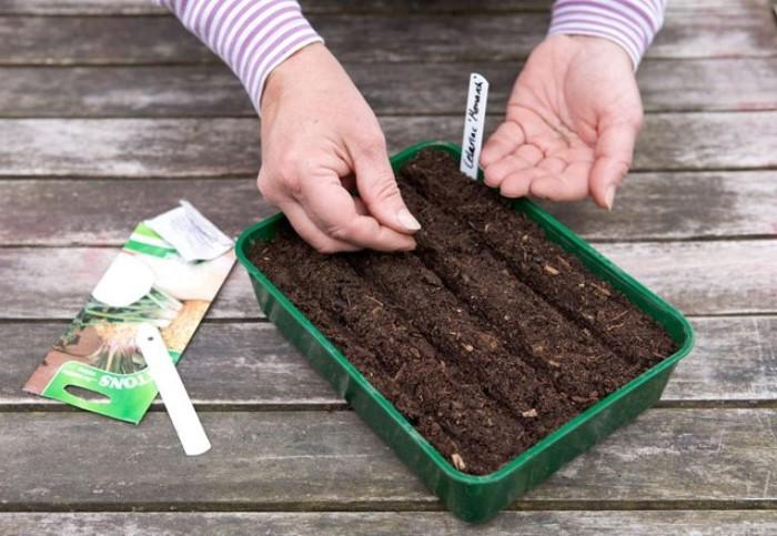 В марте можно сажать культуры для раннего урожая.