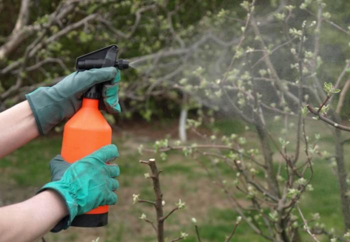 Опрыскивать растения нужно теплой водой и в период, когда на них еще есть почки / Фото: i.pinimg.com