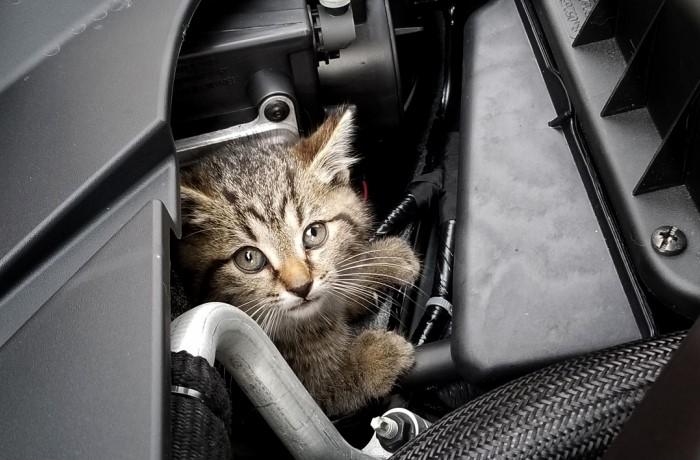Большинство котов и кошек не любят ездить в автомобилях и выражают свое отношение недовольным мяуканьем