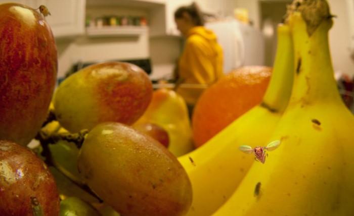 Зачастую личинки мошек попадают в дом с овощами и фруктами / Фото: fb.ru