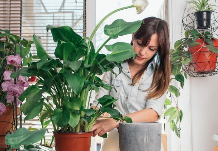 Комнатные растения привносят уют в домашнюю атмосферу