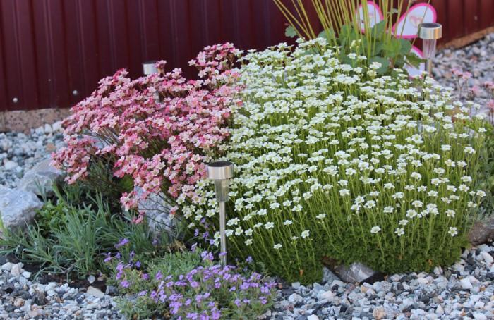 Есть цветы, которым подходят «аскетичные» условия и неудобренный грунт.