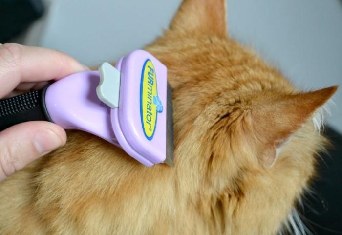 Регулярно вычесывайте животных, особенно в период линьки / Фото: kotiko.ru