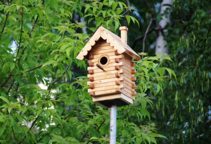 Сделайте побольше скворечников на участке, а дальше птицы помогут сами / Фото: zaraysk-adm.ru