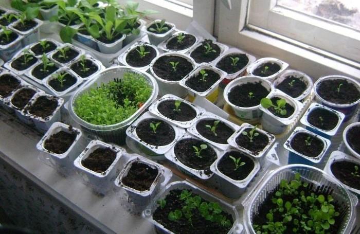 Подходят позднеспелые и медленно растущие сорта  / Фото: dachamaster.org