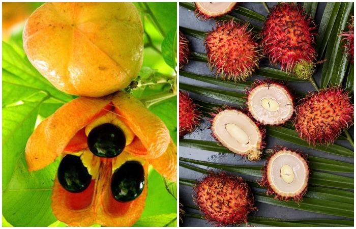 Аки и рамбутан - тропические фрукты, с которыми стоит быть поосторожнее
