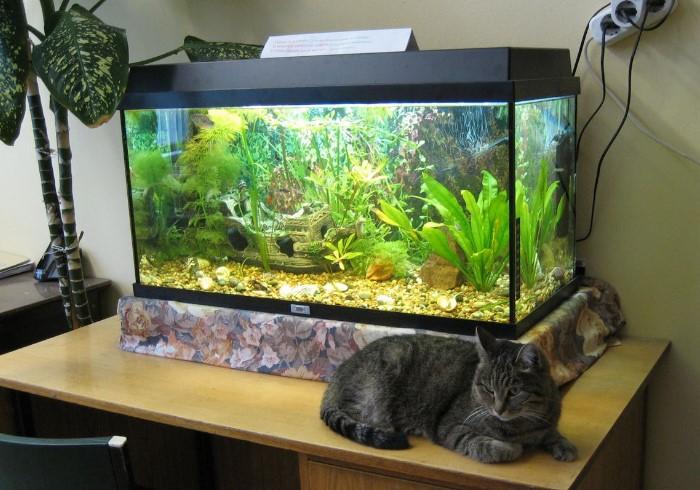 Жесткую воду также необходимо смягчать для аквариума / Фото: womanadvice.ru