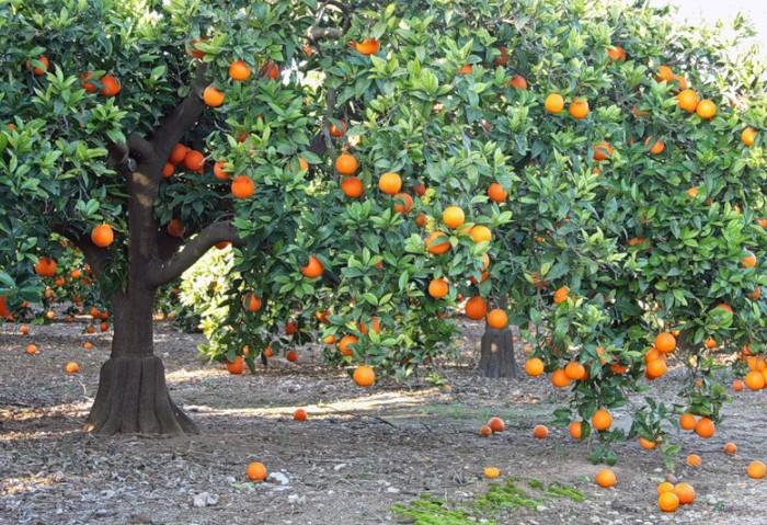 Апельсиновая древесина обладает эффективной акустической изоляцией / Фото: opt-1463806.ssl.1c-bitrix-cdn.ru