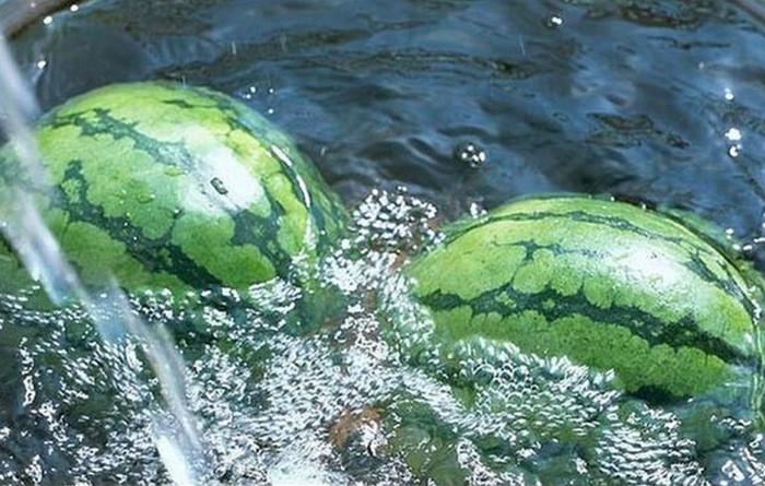 Способ неудобен тем, что придется менять воду каждые 10 дней / Фото: 9ban.ru