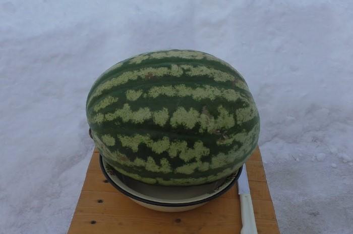 Арбуз зимой - кусочек летнего наслаждения / Фото: i.ytimg.com