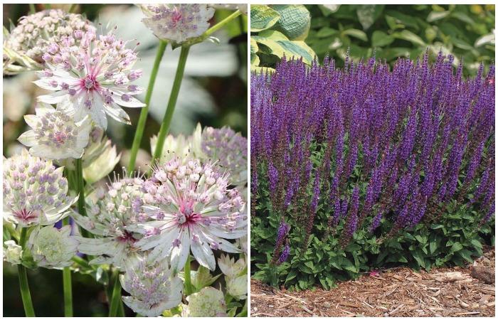 Этот вариант подходит для легкого и плодородного грунта, растения не требуют много влаги